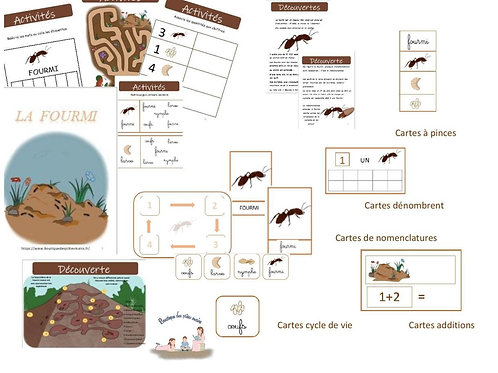 "Box zoologie ""La fourmi"""