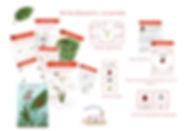 visuel site-page-001.jpg