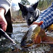 Fishing in the Truckee River Reno.jpg