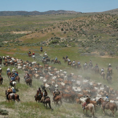 Reno cattle drive