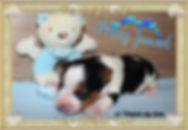 PicsArt_09-01-02.00.47.jpg