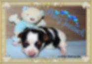 PicsArt_09-01-02.02.19.jpg