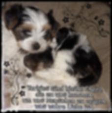 PicsArt_01-29-07.16.46-01.jpeg