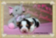 PicsArt_09-01-02.04.10.jpg