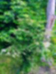 Max_edited_edited_edited.jpg