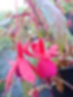 Fuchsia Aztec-min.jpg