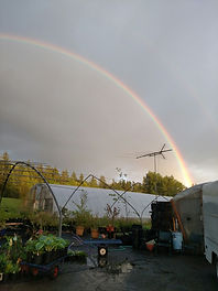 Rainbow in the Nursery.jpg