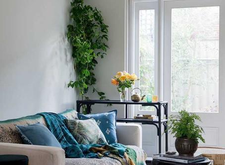 DECORAÇÃO COM PLANTAS: Dê vida e charme aos ambientes.