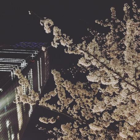 来年も桜は咲きます