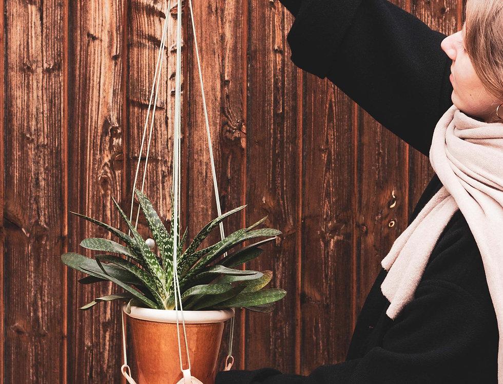 planty. Blumenampel // beige