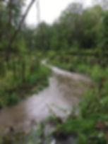 Genora Stream - After.JPG