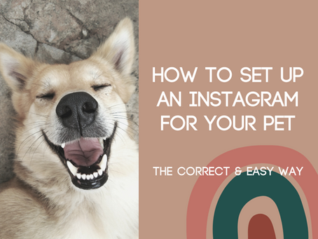 How to Set Up an Instagram for Your Pet