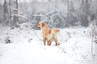Winter is back in Estonia!! _) Walk in t