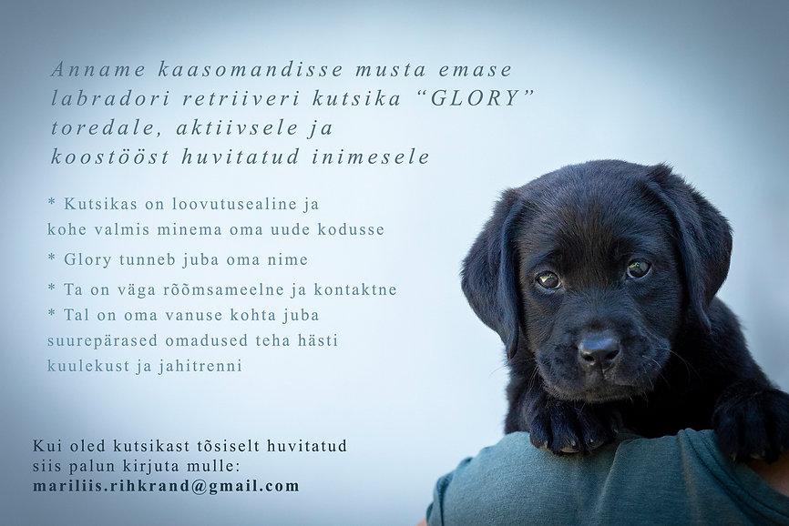 Glory_kuulutus.jpg