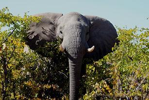 Nosy Elephant