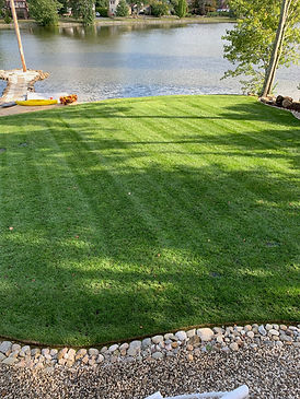 grass, lawns, lawn care, new city, alpine lawn,