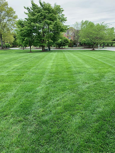 new jersey lawn care, bergen county landscaper, ground manintence, spring clean up, fall clean up, pictures of lawns