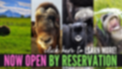 Reopen Web Banner (1).png