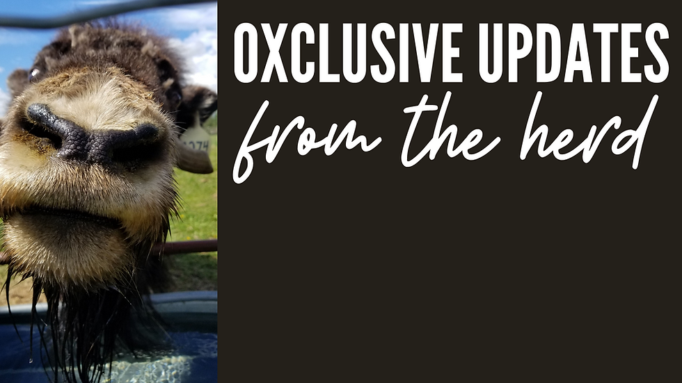 GET OXCLUSIVE UPDATES! (2).png