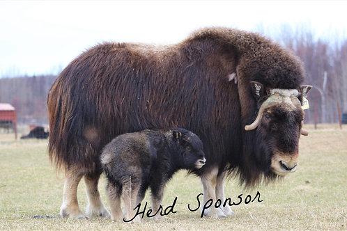Herd Sponsor