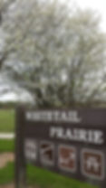 Whitetail Prairie & Serviceberry.jpg
