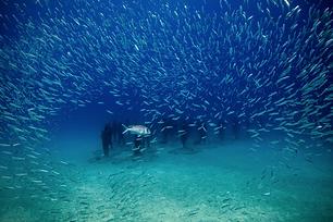 Aquatis Plongée Lanzarote - Musee Atlantiquee