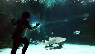 Aquatis Plongée Lanzarote - Requins