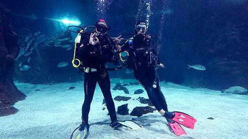Diving in Aquarium Lanzarote