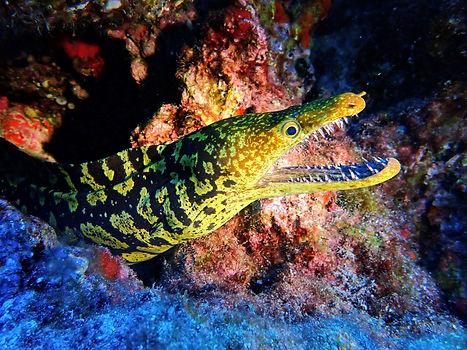 Aquatis Diving Lanzarote - Moray Eel