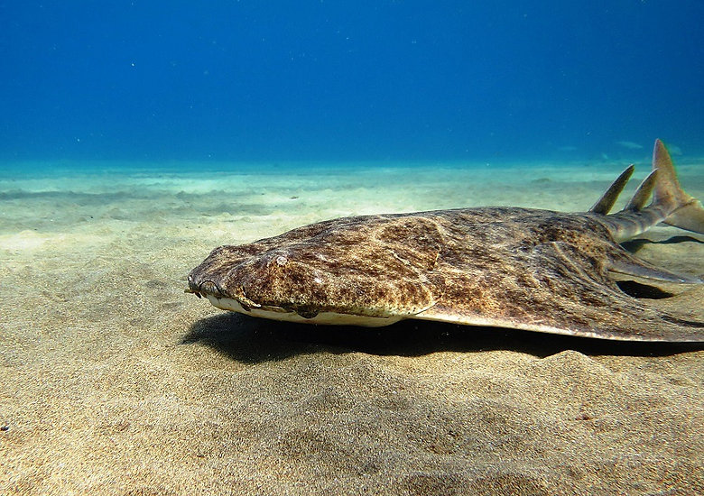 Aquatis Diving Lanzarote - Costa Teguise