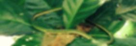organic farming in Costa Rica
