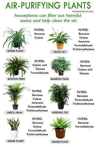 air-purifying-plants.jpg
