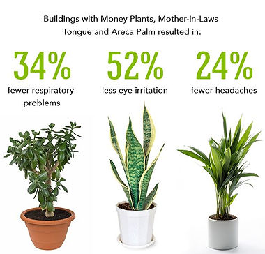good-indoor-plant-best-indoor-plants-myf