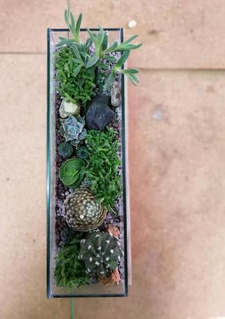 Cactus Garden Scape