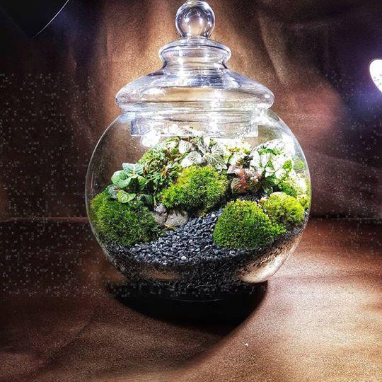 Victorian Glass Globe Terrarium