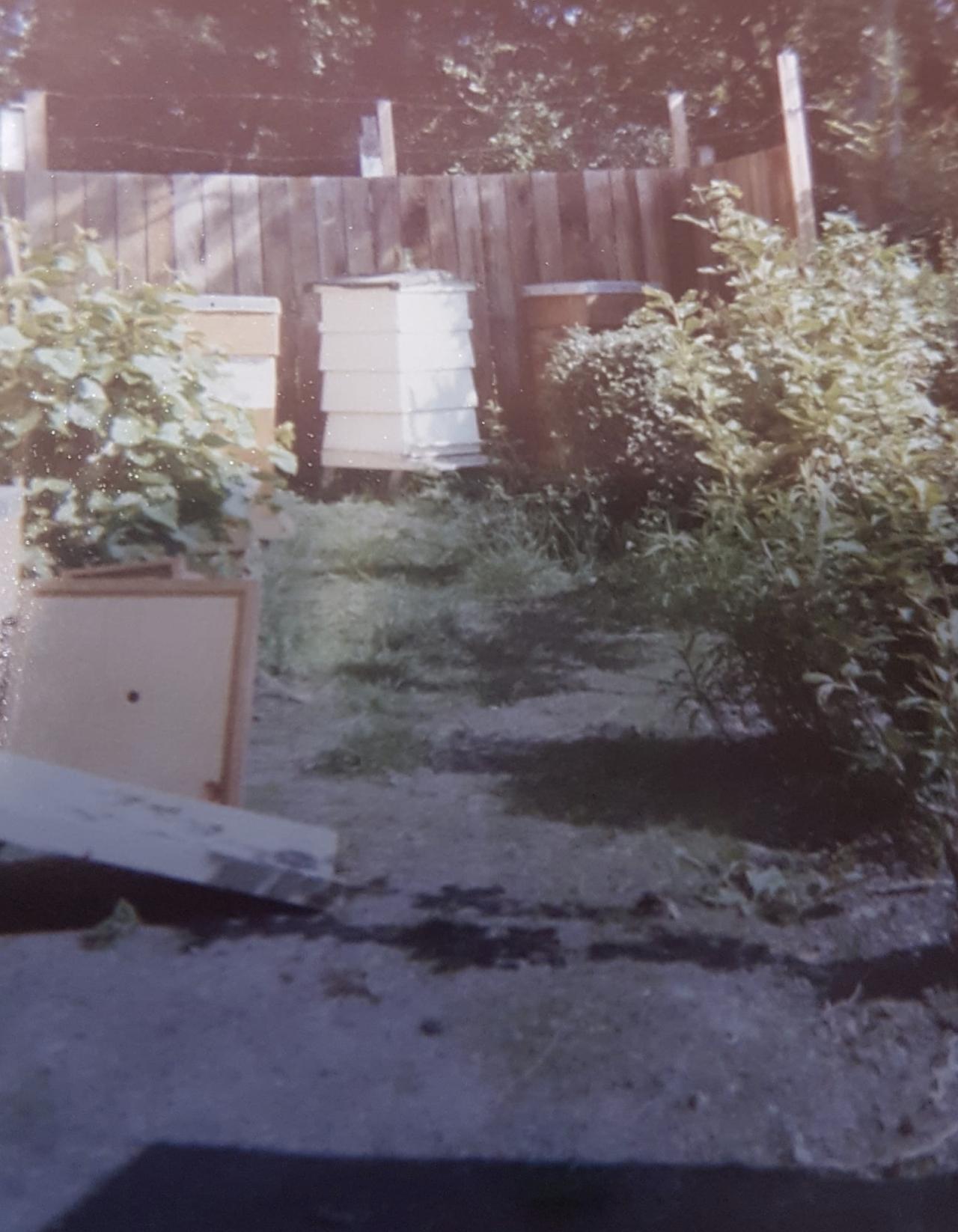 1977 apiary