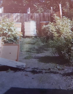 1977 apiary.png