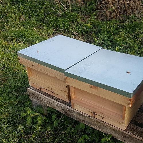 Full Colony In Cedar Hive - £280