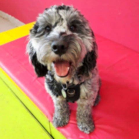 Dog day care south london, peckham, brixton, camberwell, stockwell, dulwich, dog day care near me