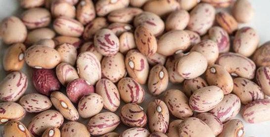 Rare Speckled Taylor Hort String Beans- Dwarf Beans 2 oz