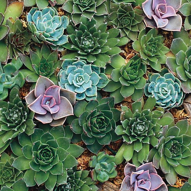 Planting Indoor Succulents