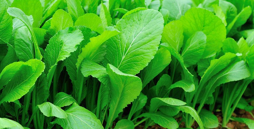 Ra'pe-THE FORGOTTEN GREEN 1/2 oz  higher protein sweet green