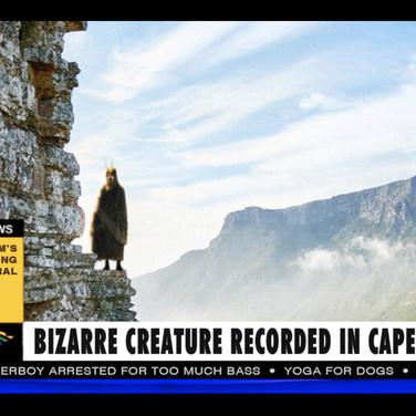Velvet Owl Cape Town
