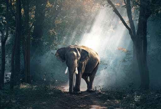 pexels-elephant sunrays.