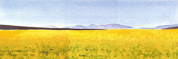 Canola Greeting Card
