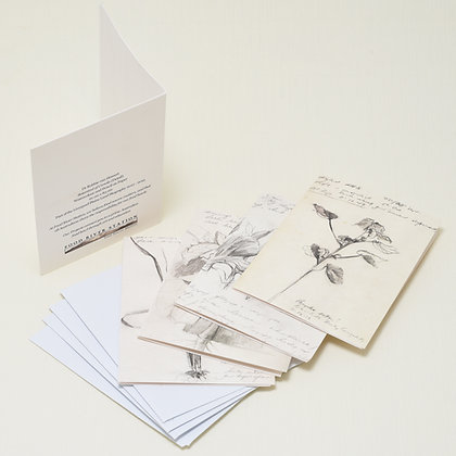 Botanical Gift Cards x 4 (Field Journal Studies)