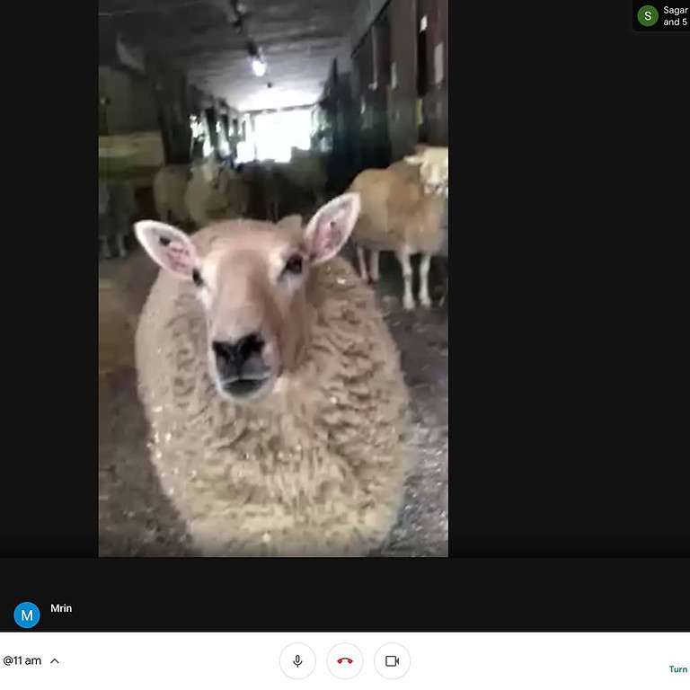 Virtual Farm tour