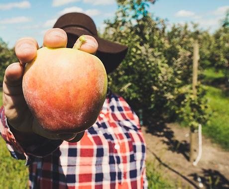 Cidrerie bretagne pomme