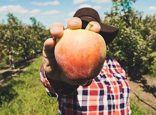 Farmer Holding Fruit