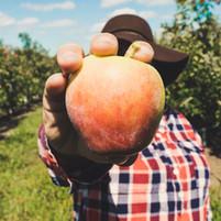 Fruta de exploração do agricultor